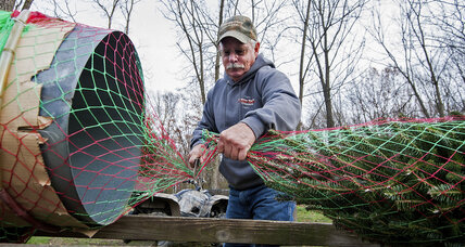 ​Northeast Christmas tree farmers get drought in their stockings