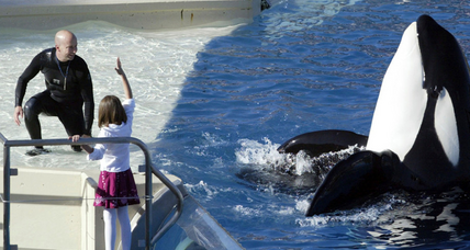 SeaWorld San Diego puts an end to its most popular orca show