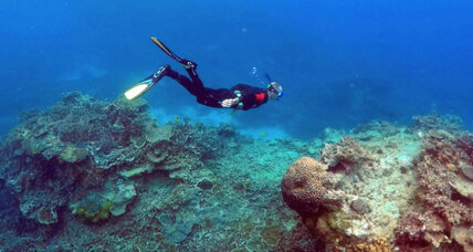 Scientists investigate what nearly destroyed the Great Barrier Reef 125,000 years ago