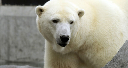 How polar bears could survive climate change: US plan takes a hard look