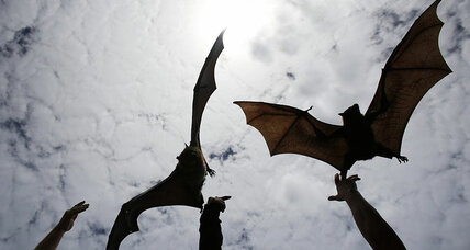 Did all bats once have sonar?