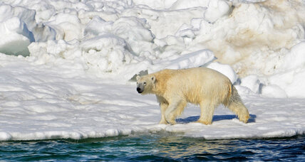 Can a joint US-Russian research team protect Alaska's polar bears?