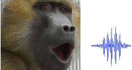 Apparently, baboons can make human-like vowel sounds