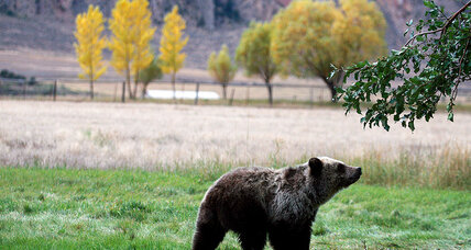 Bring back the grizzlies? Feds draft plan to restore Washington's bear population