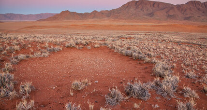 What is causing Namibia's mysterious fairy circles?