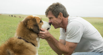 Outcry over alleged abuse in 'A Dog's Purpose.' Do live animals have a place in film?
