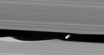 Cassini spies shy moon nestled among Saturn's rings