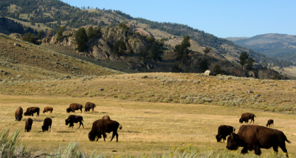 After suspension, Interior Department returns to Twitter with a bison and an apology