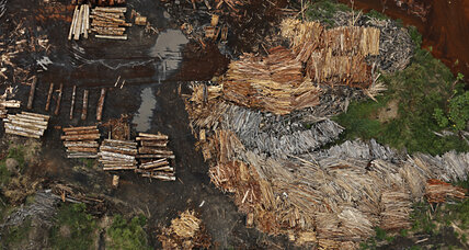 In Brazil, a new tool to cut illegal wood from supply chains