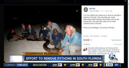 To catch a python: Florida hires Indian tribesmen to root out invasive snakes