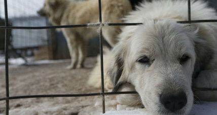Why did the USDA shut down an online animal abuse database?