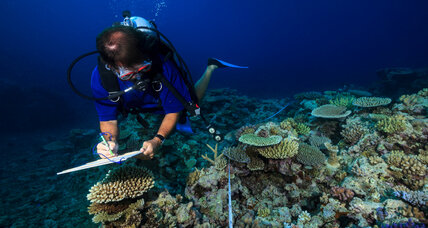 Australian scientists ask tourists: Help us track the health of coral reefs