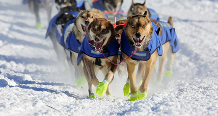 In Alaska, 71 mushers kick off the 1,000-mile Iditarod race