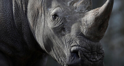 Poachers shoot and kill a rhino ... outside Paris