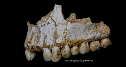 What was the real paleo diet? Prehistoric plaque reveals what Neanderthals ate.