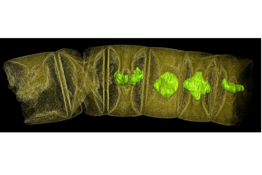 How these 1.6 billion-year-old fossils could reveal clues about the origins of algae