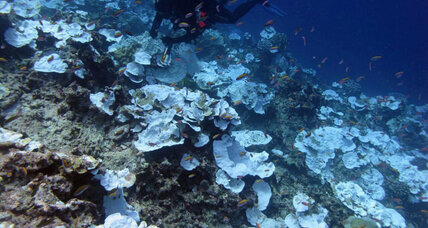 Deeper down, are coral reefs surviving climate change?