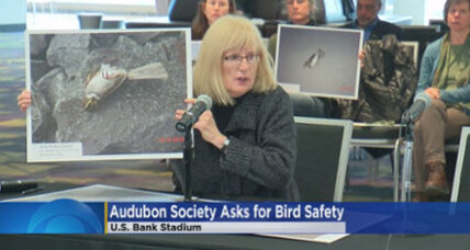 Minnesota's U.S. Bank Stadium is proving deadly for birds