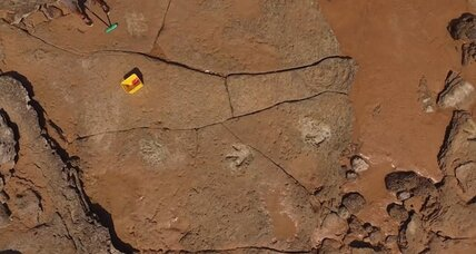 Scientists describe treasure trove of dinosaur tracks in Australia
