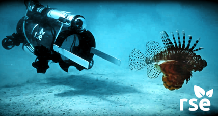 Can we eat our way out of the lionfish invasion? (+video)