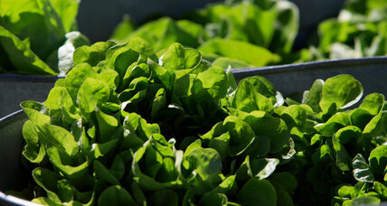 In lettuce price spike, a taste of things to come