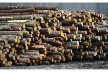 Timber theft: Malawi prepared to come down hard on 35 illegal loggers