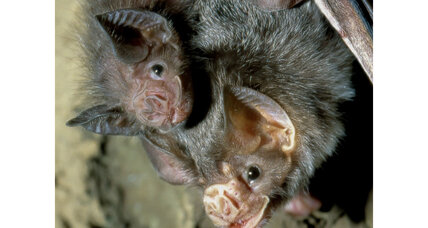 What vampire bats can teach us about cooperation
