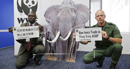Hong Kong ivory ban could hurt Africa's elephants before it helps them