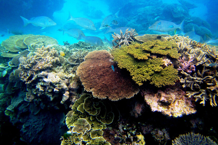 From coral sperm banks to climate action: What's best to save reefs?