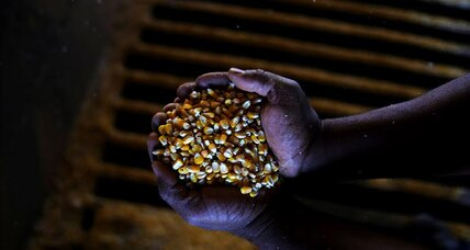 Massive harvests of corn, soybeans pose storage problem in Brazil