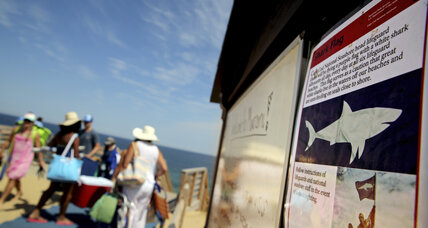 For some conservationists, shark safety is simple: just stay out of the water