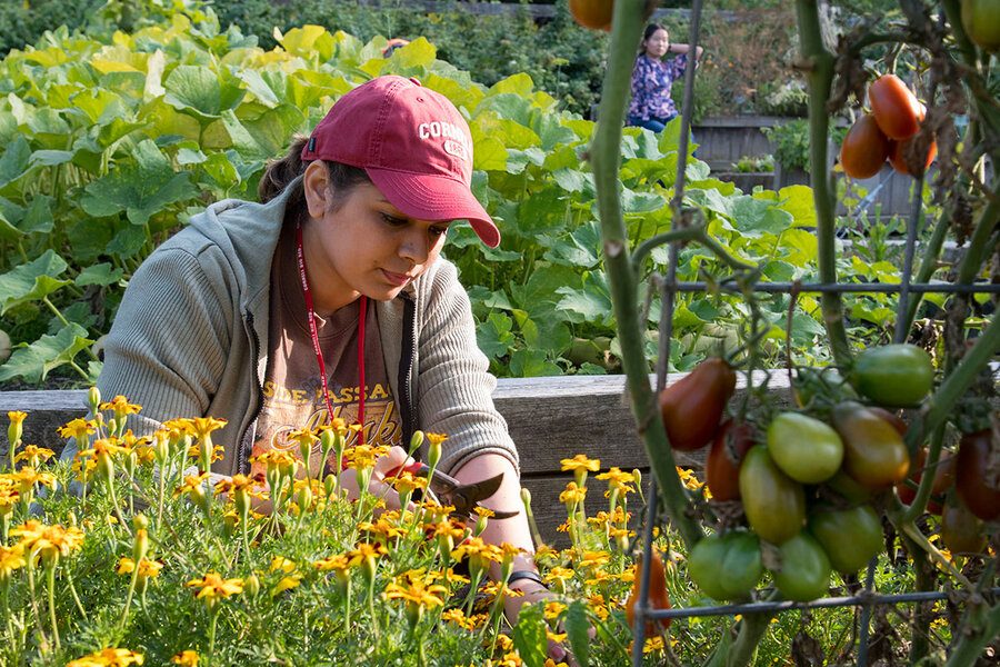 Sowing common ground: Botanical gardens tell the story of climate ...