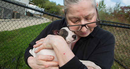 Puerto Rican puppies find forever homes in New England