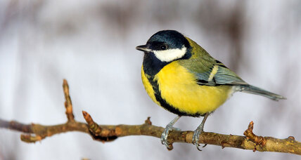 Backyard bird feeders prompting beak evolution