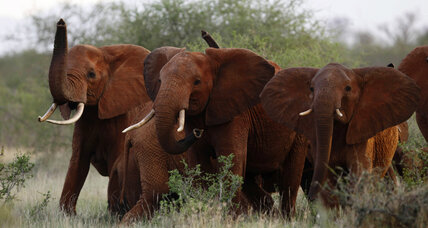 Trump administration revokes ban on imported elephant trophies