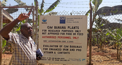 In GMO debate, Uganda seeks to balance hope and fear