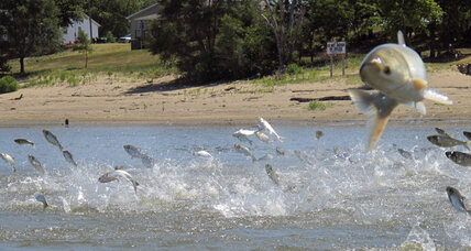 States team up to fortify Great Lakes against invasive carp