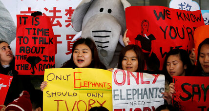 Hong Kong's ivory ban sparks fresh hope for endangered elephants