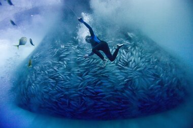 One film festival's quest to turn moviegoers into ocean stewards