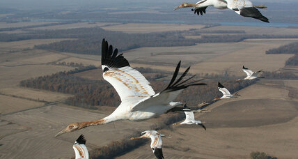 As more Texans 'Give a Whoop,' hope for saving iconic cranes – and coast