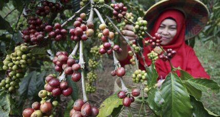 Coffee brews peace, business between communities in the Philippines