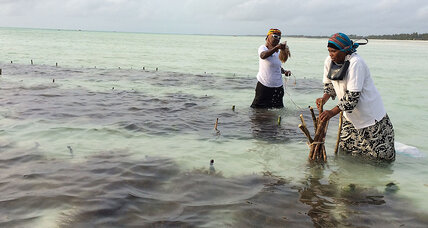 Warming waters hurt Zanzibar's seaweed. But women farmers have a plan.