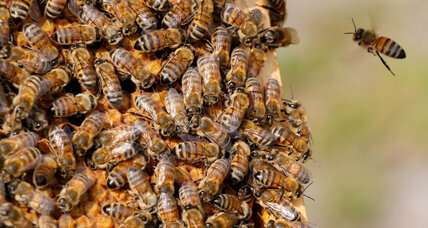 As climate change worsens, East African beekeepers struggle with harvest