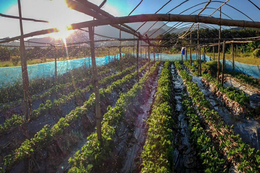 Why young professionals are taking up farming in Thailand