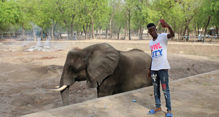 In Boko Haram's hometown, a favorite pastime endures: going to the zoo