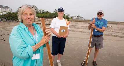 From tree spotters to beach brigades: a golden age of citizen science