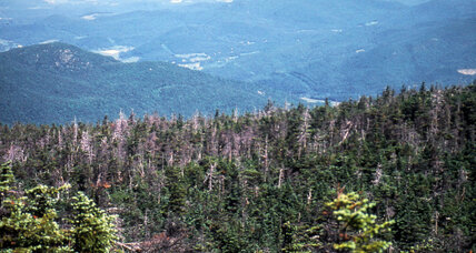 Pollution regulations decrease acid rain, spur red spruce rebound