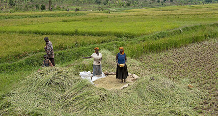 In Rwanda, agricultural reforms boost food security and slash poverty