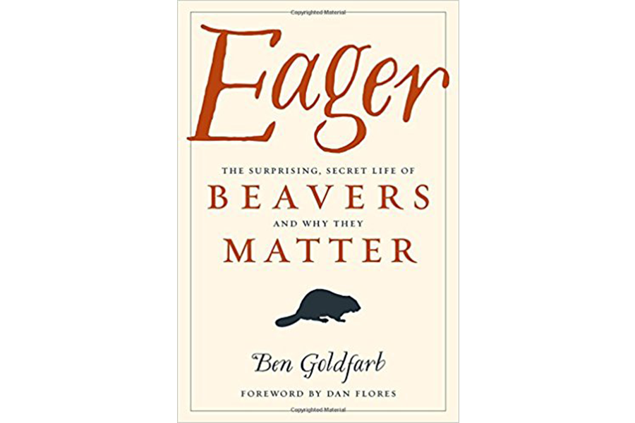 Eager Is A Passionate Captivating Love Letter To The Beaver