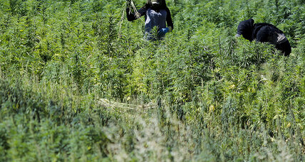 Lebanon's hashish equation: If farmers gain, does Hezbollah lose?